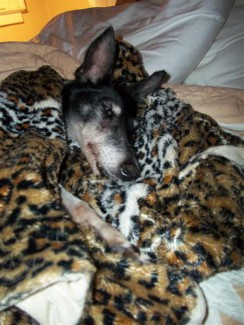 Leopard_blanket